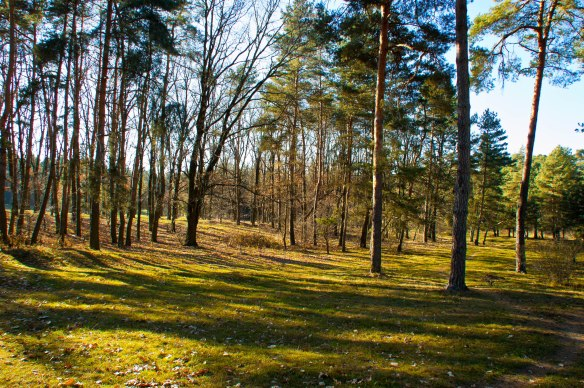 This central Ukrainian forest was where decisions were made that brought the German Army defeat on the Eastern Front (Credit: підхід до ставки)