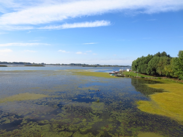 The waters of Lake Tisza
