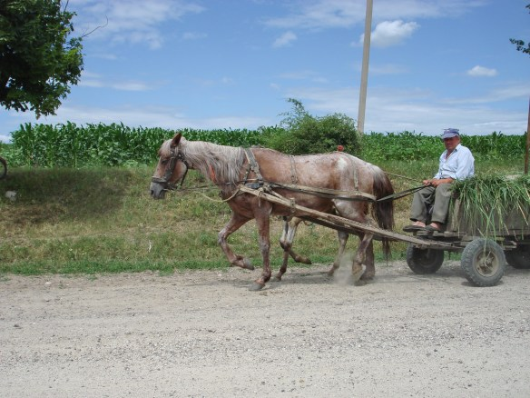 Horse drawn cart in Moldova