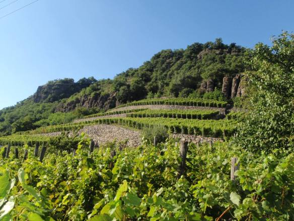 Vineyards in the Somló Wine Region