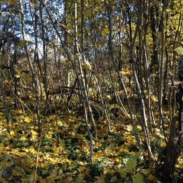 Overgrown plot in Yanivsky Cemetery