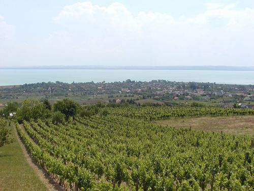 Vineyards at Csopak with lake Balaton in the distance
