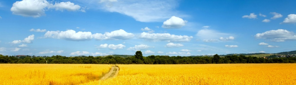 The countryside of Ukraine - the beauty hides a terrible tragedy