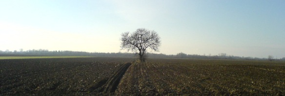 One tree landscape - Slavonia