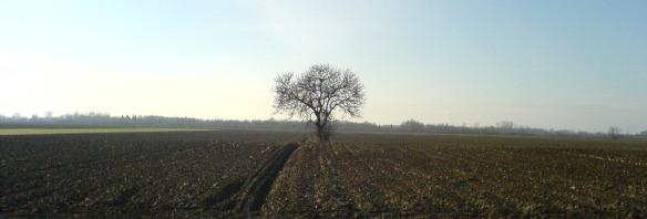One tree landscape - Slavonia
