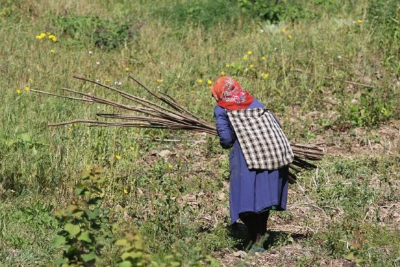 Survival instincts - A Bulgarian villager collecting branches
