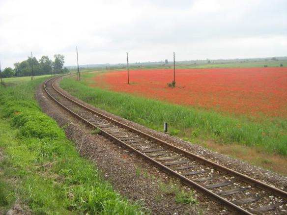 Vojvodina landscape