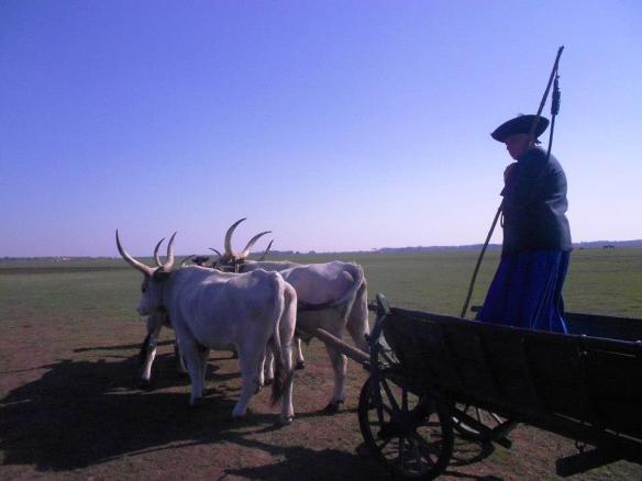 Heading out to the Hortabagy - Hungarian cowboy on a wagon cart