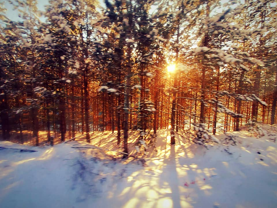 A Pattern Of Brilliance - Woods Snow & Sun in Serbia